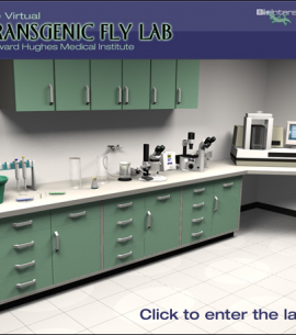 HHMI Virtual Fly Lab